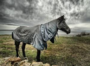 Self Pity Horse